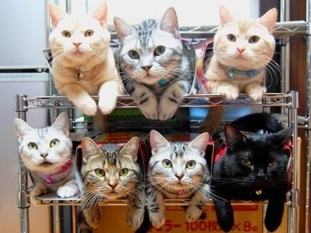 Как хранить кошек?
